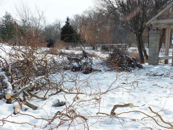 Arboretum surveys ice storm damage