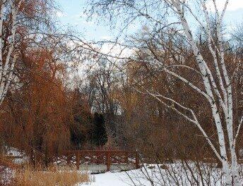 Sponsors fund arboretum