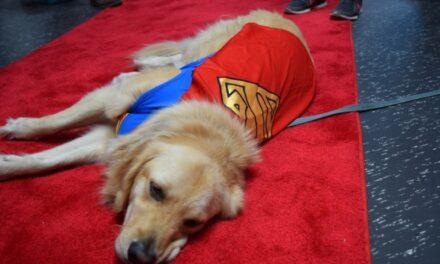 Artists, cosplayers take over Comic Expo