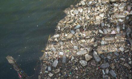 Volunteers clean up 50 kg of garbage from Etobicoke shoreline