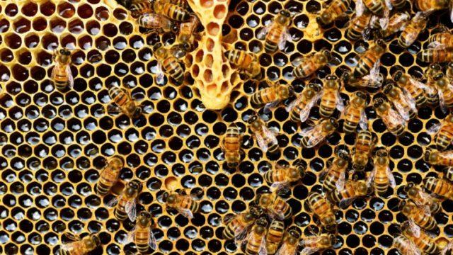https://humberetc.ca/wp-content/uploads/2018/12/beehive-337695_1920-640x360.jpg