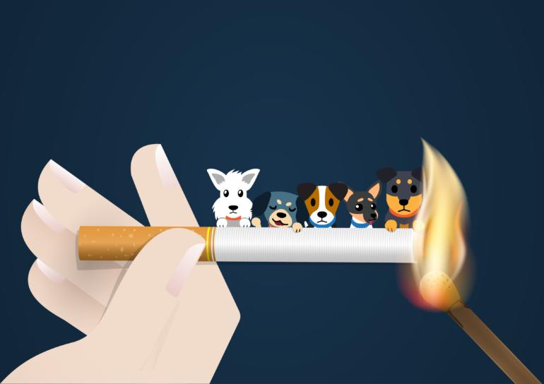 The dangers of smoking around pets